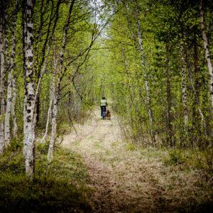 Una donna porta a spasso il suo cane attraverso i boschi di betulle che circondano il lago Litle Rostojavry (Norvegia 2009)