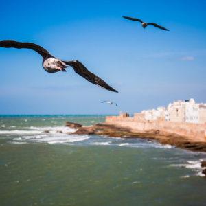 Gabbiani che, come tutti i giorni, volteggiano sulla fortezza di Essaouira (Marocco, 2010)